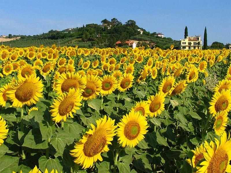 flower valley west lake hanoi
